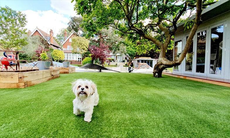 Artificial Grass Dog Easigrass Pretoria